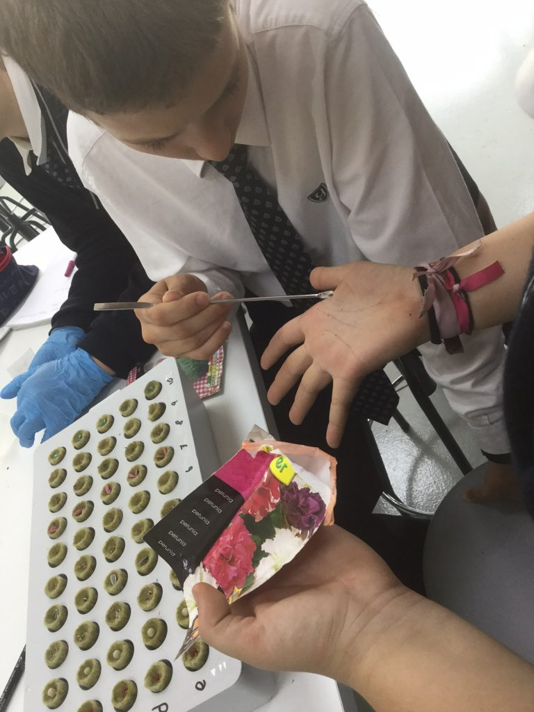 The seeds project in biology at yago School 3