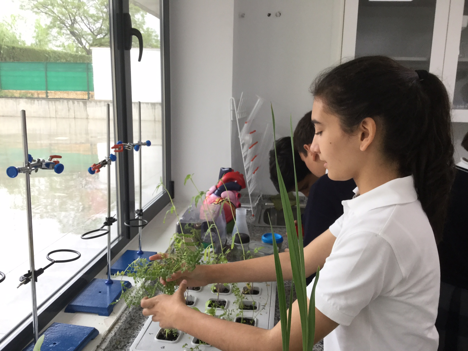 The seeds project in biology at yago School 2
