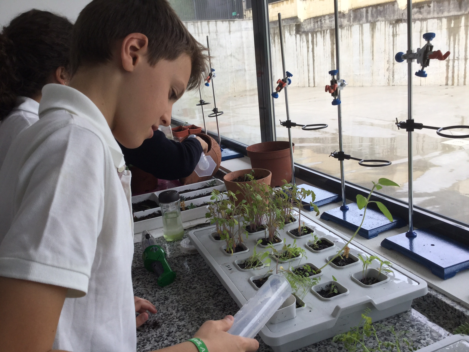 Seeds project in biology at Yago School