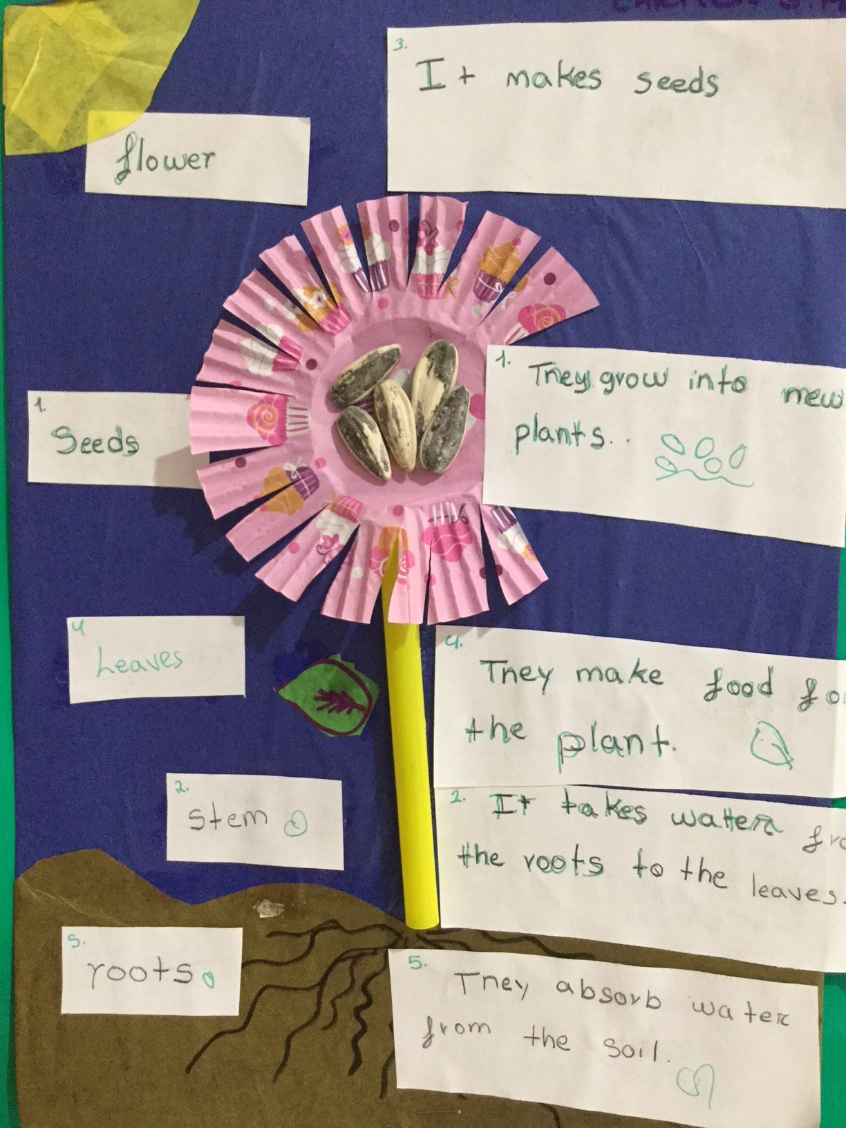 Primary 2 Natural Science Project: Plants