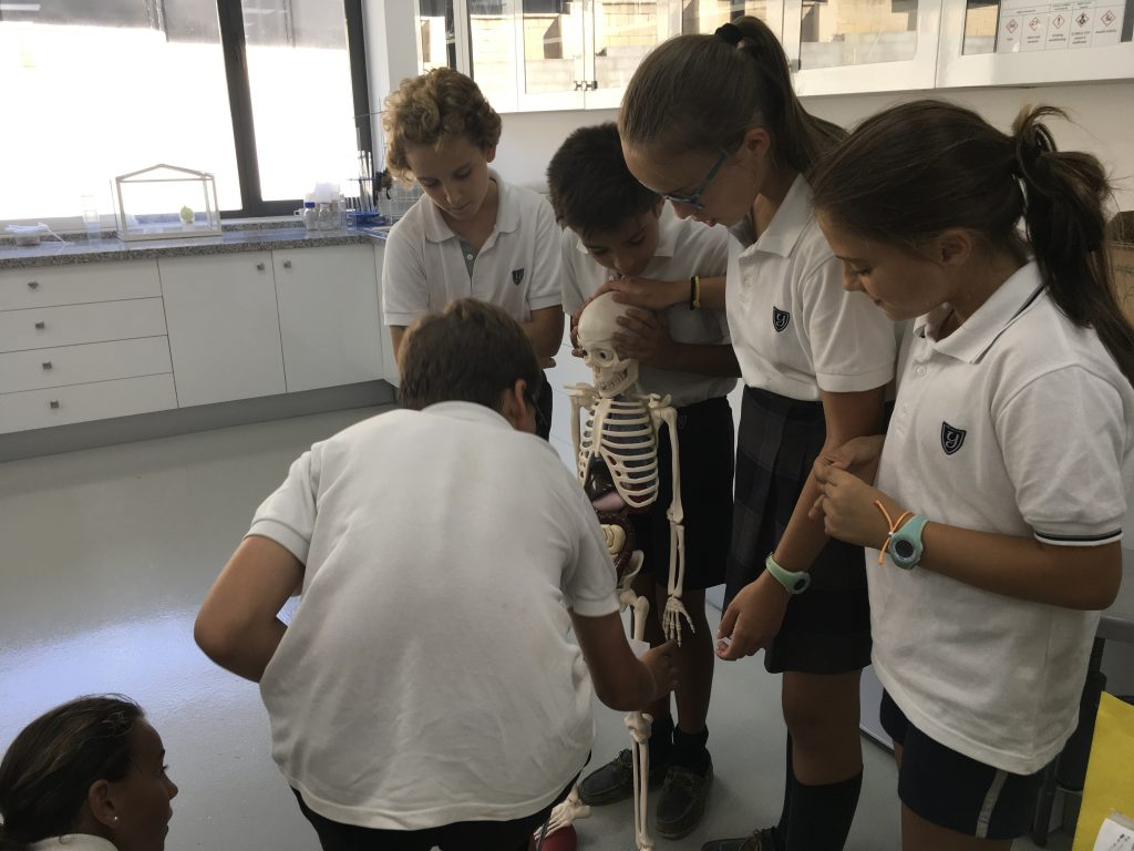 Cooperative learning in Science
