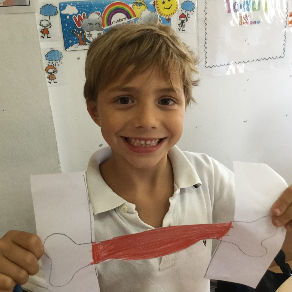 Science Project in Primary 2: Our bones